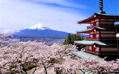 富士吉田市の桜の季節は見どころ満載です!
